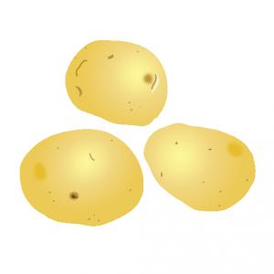 ジャガイモ独特の形は楕円形 ... : 5年の算数 : 算数