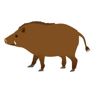 猪(いのしし)」のイラスト ... : 算数 幼児 : 幼児