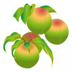 算数 2年 算数 : うめの実は緑色で、熟すと黄色 ...