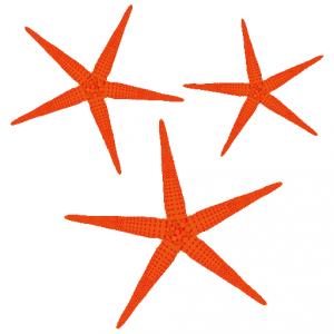 あかひとで_赤海星_red starfish