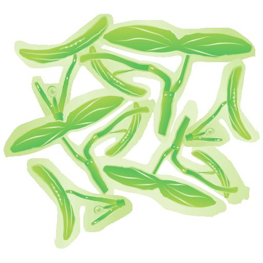 じゅんさい蓴菜