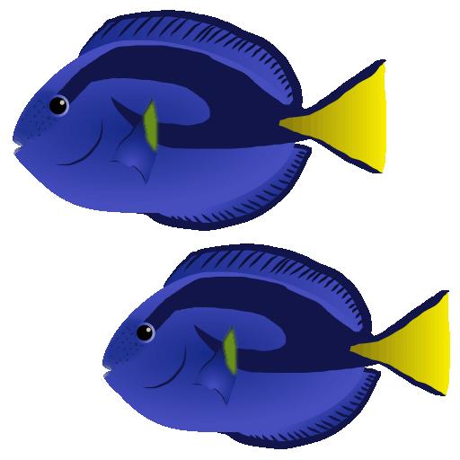 ナンヨウハギ_南洋剥_blue tang