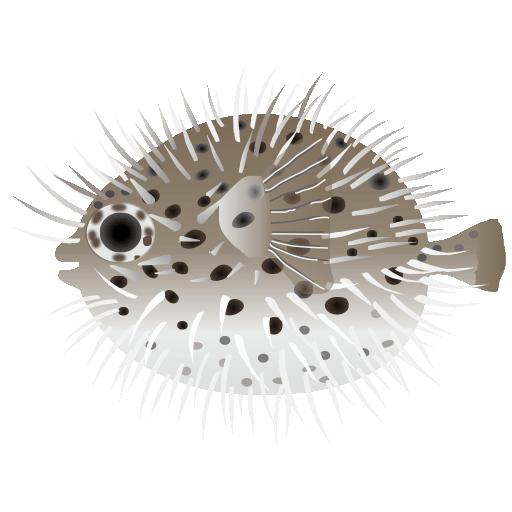 ハリセンボン_針千本_porcupine fish