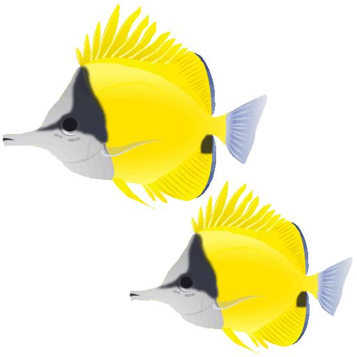 フエヤッコダイ_笛奴鯛_forceps fish