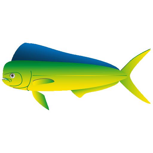 シイラ_鬼頭魚_mahimahi