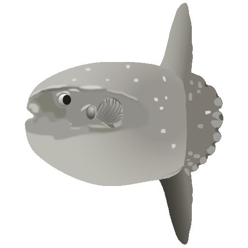 マンボウ_翻車魚_sunfish