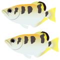 テッポウウオ_鉄砲魚_archerfish