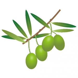 オリーブ_橄欖