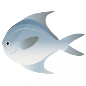 マナガツオ_真魚鰹_harvestfish