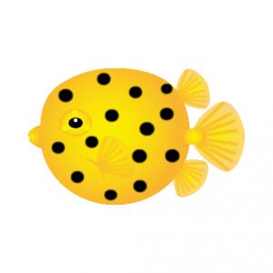 ハコフグ_箱河豚_boxfish_
