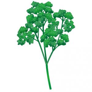 鉛筆ツールで葉の形を描いて ...