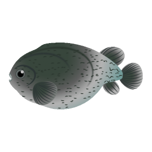 ホテイウオ_布袋魚_smooth lumpsucker