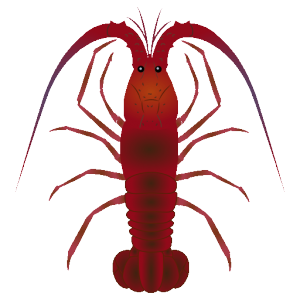 イセエビ_伊勢海老_spiny lobster