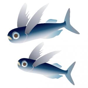 とびうお_飛魚_flying fish