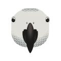 ヨウム_洋鵡