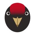 クマゲラ_熊啄木鳥