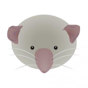ジャコウネズミ