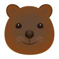 クアッカワラビ―_短尾矮袋鼠