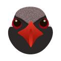 ヤンバルクイナ_山原水鶏