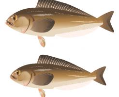 %e3%81%bb%e3%81%a3%e3%81%91_%e5%8c%97%e6%96%b9_atka-mackerel